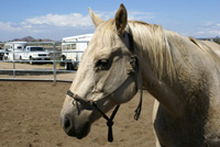 Bella - Rescued Horse