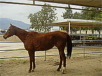Duchess  - Rescued Horse