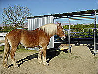 Taffy  - Rescued Horse