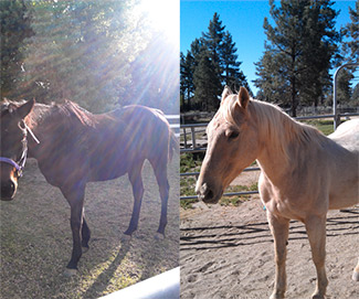 Forever Free Horse Rescue - Duke and Faith
