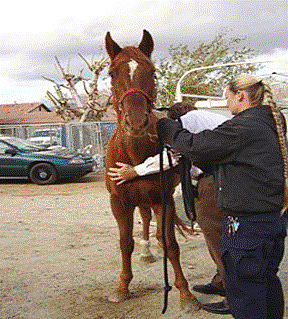 Forever Free Horse Rescue - Grace