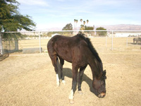 Hope - Rescued Horse
