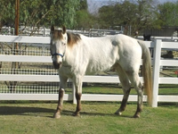 Silver - Rescued Horse
