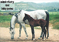 Forever Free Horse Rescue - Story