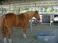 Topper  - Rescued Horse